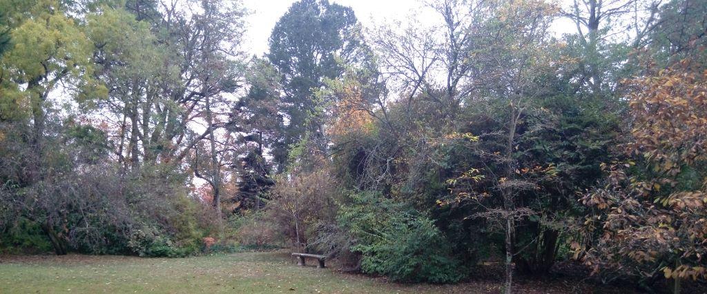 Arboretum Vilmorin - Nov. 2018